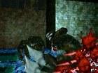 Resident Evil Deadly Silence - Imagen DS