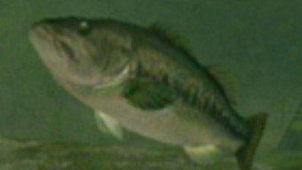 Video Reel Fishing: Angler's Dream, Vídeo del juego 1