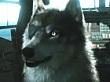 Metal Gear Solid V: The Phantom Pain nos permitir� adoptar un lobo
