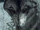 Call of Duty: Ghosts - The Wolf (DLC)
