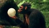 Un vistazo a la exploración de Ancestors: The Humankind Odyssey