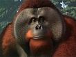 Planet Zoo se ve increíblemente bonito en su tráiler de la Gamescom 2019